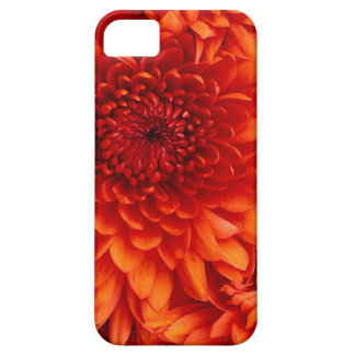 Red Dahlia of Rock Center - Never Lose Your Phone iPhone SE/5/5s Case