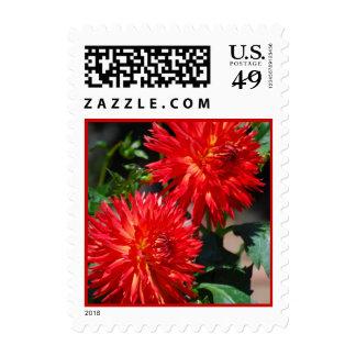 Red Dahlia Pair Postage