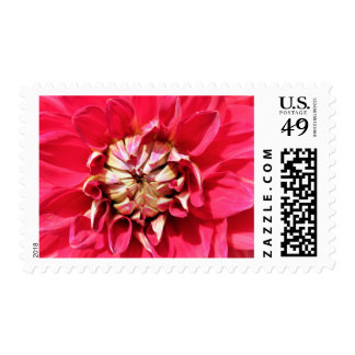 red dahlia postage stamps