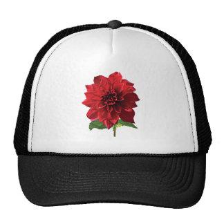 Red Dahlia Spartacus Hats