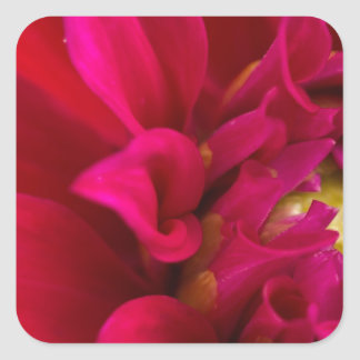 Red Dahlia Square Sticker