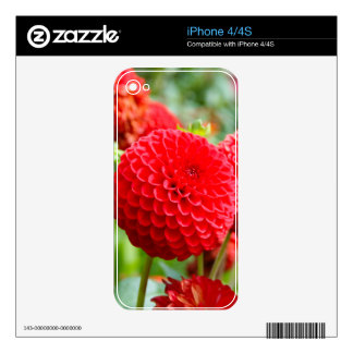Red Dahlias in the Summer iPhone 4S Skins