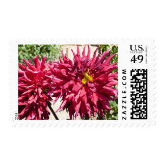 Red Dahlias Postage Stamps