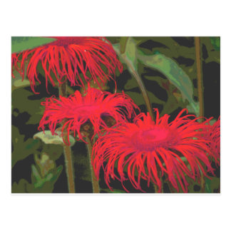 Red Daisies Postcard