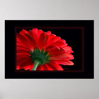 Red Daisy23x35 Print