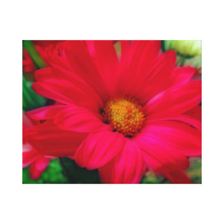 """""""Red Daisy"""" Canvas Print"""