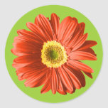 Red Daisy Flower Stickers