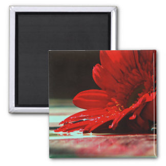Red Daisy Gerbera Flower 2 Inch Square Magnet