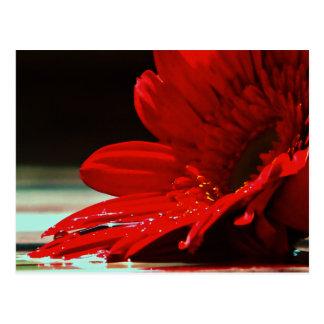 Red Daisy Gerbera Flower Postcard