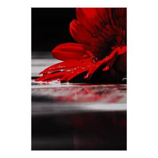 Red Daisy Gerbera Flowers Poster