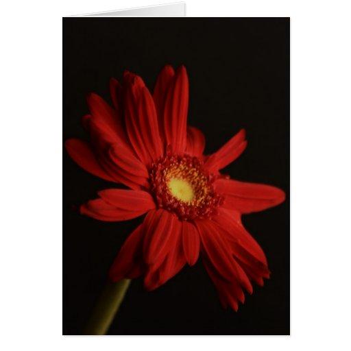 Red Daisy {Macro} Card