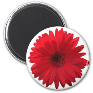 Red Daisy Magnet