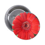 Red Daisy Pinback Button