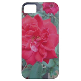 Red dark pink Rose iPhone 5/5S Cover