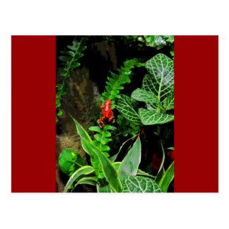 Red Dart Frog CB Postcard