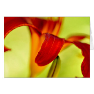 Red Day lily Card