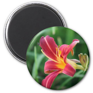 Red Daylily Flower  Magnet