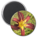 Red Daylily Fridge Magnet