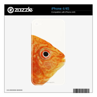 Red Deacon fish iPhone 4 Decal