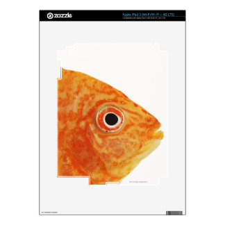 Red Deacon fish Skin For iPad 3
