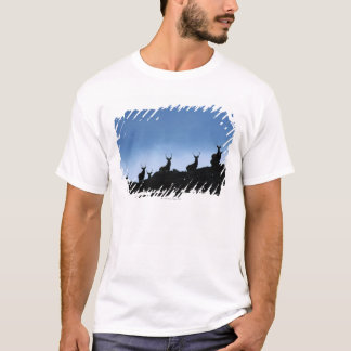RED DEER (CERVUS ELAPHUS) SILHOUETTED AGAINST T-Shirt