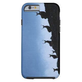 RED DEER (CERVUS ELAPHUS) SILHOUETTED AGAINST TOUGH iPhone 6 CASE