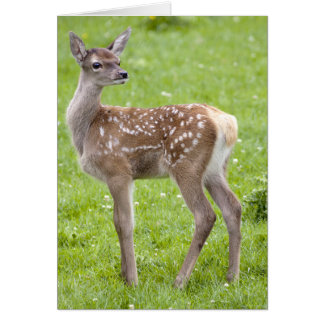 Red Deer Fawn Card