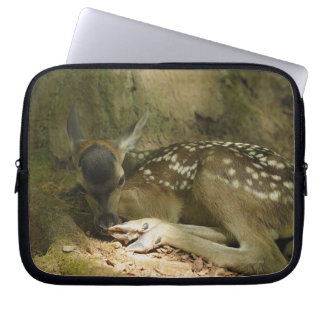 Red Deer Fawn in Forest, Germany Computer Sleeve