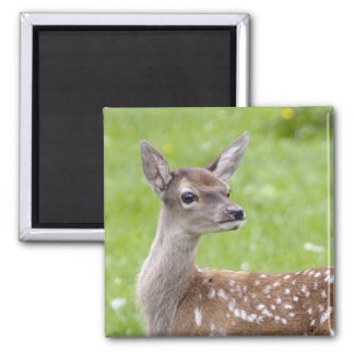 Red Deer Fawn Magnet