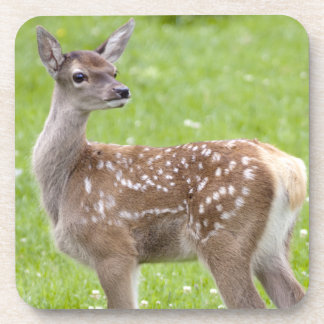 Red Deer Fawn Set of 6 Coasters
