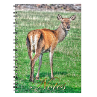 Red Deer & Field Wildlife Animal Design Notebook