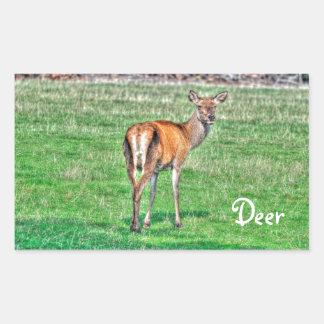 Red Deer & Field Wildlife Animal Design Rectangular Sticker