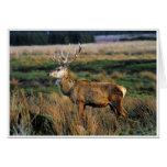 Red Deer Notecard Note Card