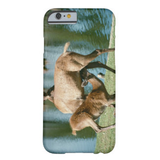 Red deer nursing offspring barely there iPhone 6 case