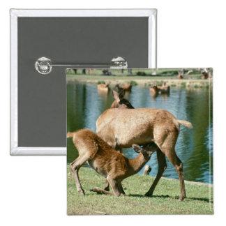 Red deer nursing offspring button