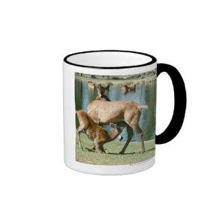 Red deer nursing offspring ringer coffee mug