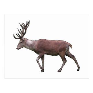Red Deer. Postcard