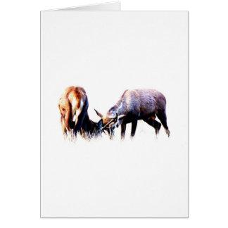 Red Deer Rut Card