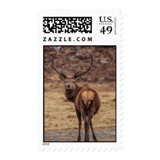 Red Deer Stag Postage Stamp