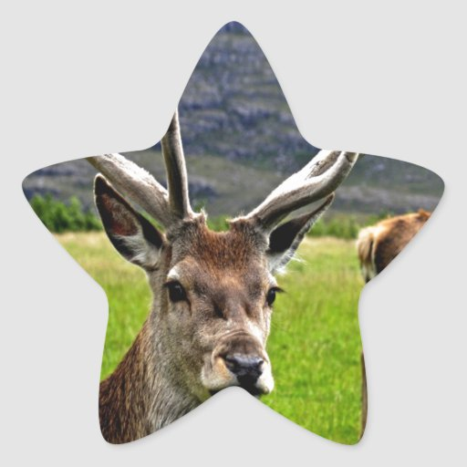 Red Deer Stag Star Sticker