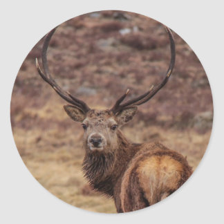 Red Deer Stag Stickers