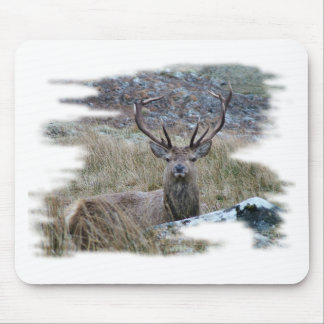 Red deer staring down. mouse pad