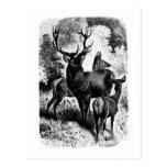 Red Deer Vintage Wood Engraving Post Cards