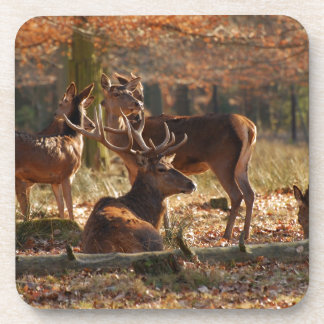 Red Deers In The Autumnal Wood Drink Coaster