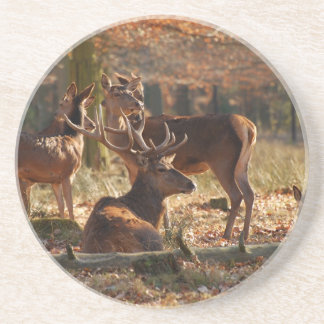 Red Deers In The Autumnal Wood Sandstone Coaster