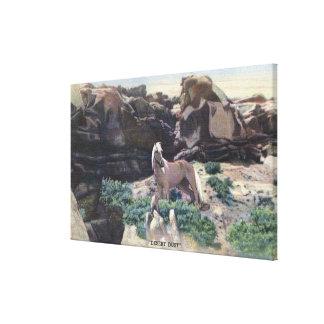 Red Desert, WY - Wild Palomino Stallion captured Canvas Print