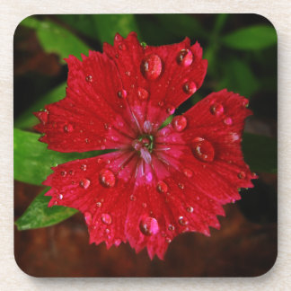 Red Dianthus With Raindrops Beverage Coaster