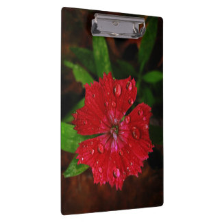 Red Dianthus With Raindrops Clipboard