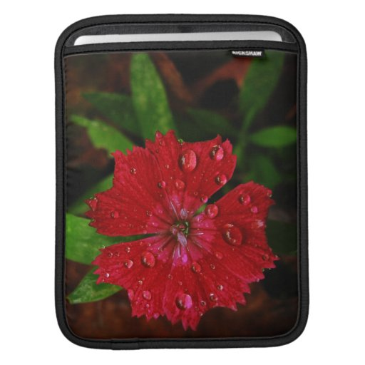 Red Dianthus With Raindrops iPad Sleeve