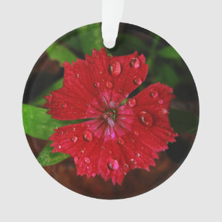 Red Dianthus With Raindrops Ornament